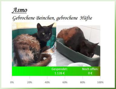 Asmo - gebrochene Beinchen und gebrochene Hüfte
