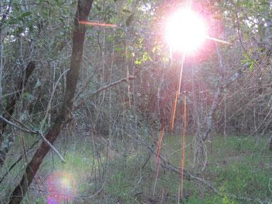 アフリカンツリーエッセンス 森の守り人サシャ・ルナ