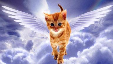 chaton sur le pont de l'arc en ciel, souvenir pour nos chats disparus