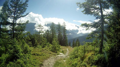 Wald Weg Zams Wenns Alpen Österreich E5