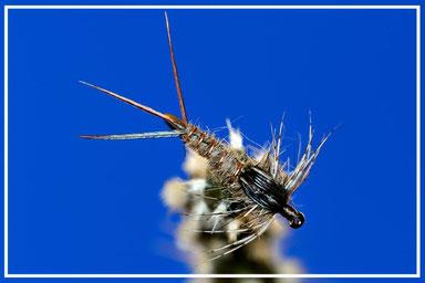rhithrogena; pesca a mosca; fly tying; flyfishing