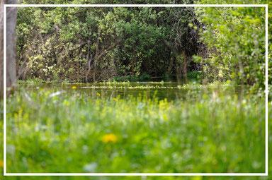 La fitta vegetazione che avvolge le sponde delle risorgive garantisce un costante apporto di terrestrial