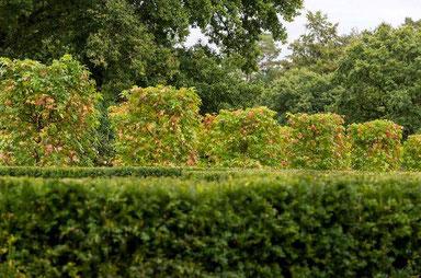 Haies dans le parc du Château de la Touche-Trébry