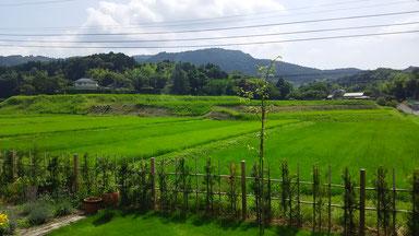 宿泊施設ナガサファームハウスから見えるナガサファームの田んぼの風景です。