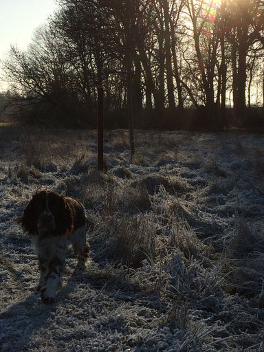 Charly genießt den Winter, Foto: Familie Werner