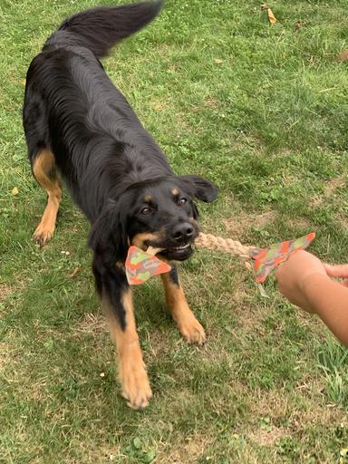 Hochwertiges Hundespielzeug