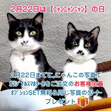 2月22日はニャンニャンニャンの日 ネコの写真でおまけが付きます。