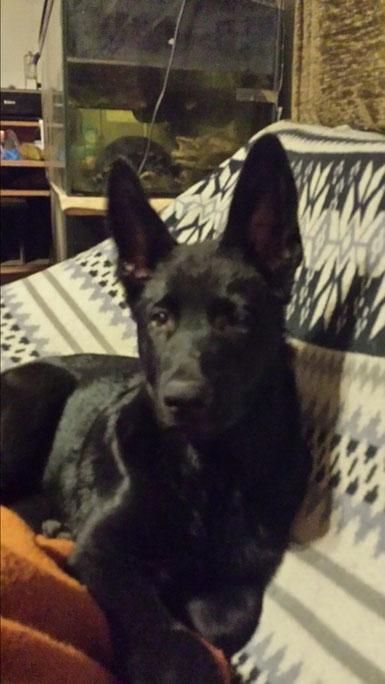 Eowyn mit 6 Monaten.
