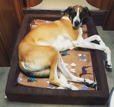 Orthopädisches Hundebett, Hundebetten Vergleich