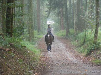 Bindung von Pferd und Mensch vertiefen