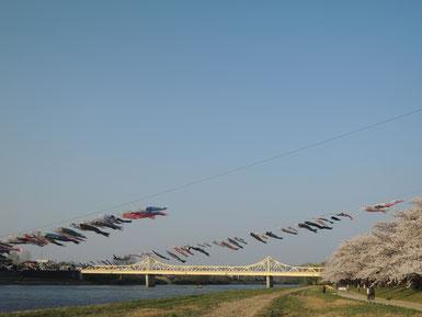 橋の近くには北上川を渡した鯉のぼりたちも。