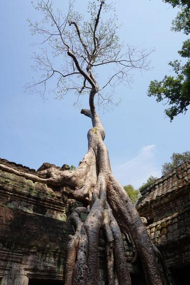 Trauma, Baum, Wurzeln, Tempel