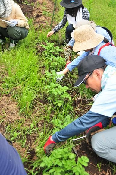 固定種 種取り 自然栽培 農業体験 体験農場 さとやま農学校