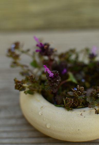small magenta wildflower