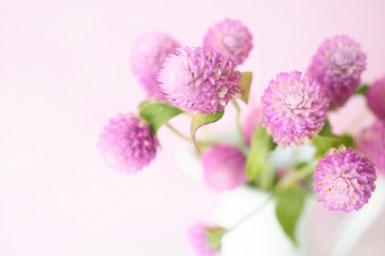 観葉植物の鉢植え。ハート形の葉。
