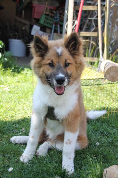 Benito 53cm und 16.5kg mit 4.5 Monaten