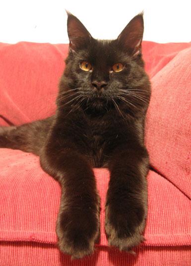 мейн кун котенок, питомник, кот мейн кун,   мейн кун, котята мейн кун, купить мейн куна, рыжий котенок мейн кун,   рыжая кошечка мейн кун, кошки, коты, котята, питомник одесса,   фото мейн куна, maine coon, maine coon cattery, kitten maine coon