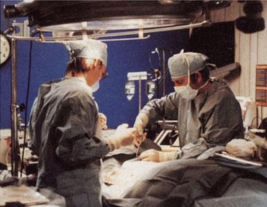 Chirurgische Präparation vor dem Kryonisieren.