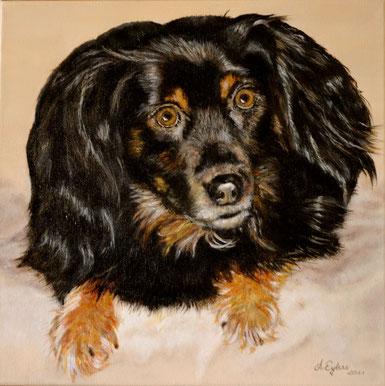 Sammy, ein Hund aus Rumänien
