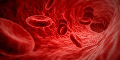 Katzengras begünstigt die Produktion von roten Blutkörperchen