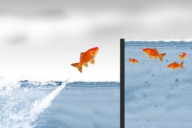 Sozialkompetenz-Optimierung: Mehr Erfolg im täglichen Miteinander. Soziale Kompetenzen, soziale Intelligenz