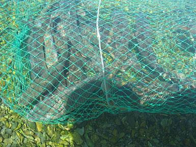 На балхаше отличная рыбалка, тут водятся сомы, сазаны, чёрный окунь, жерех, судак, вобла и т.д.