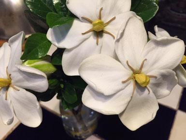 くちなしの花。いただきました!良い香りに癒されます。