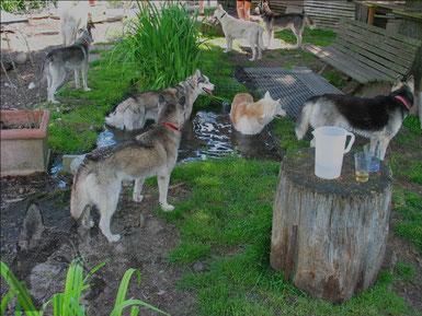 """Bei diesem """"Anti-Hundewetter"""" bleibt nur noch Baden und Saufen..."""