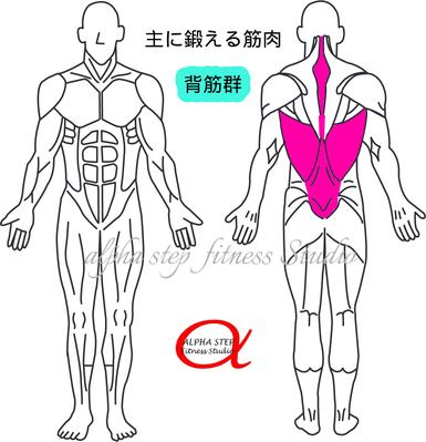 背筋(脊柱起立筋)