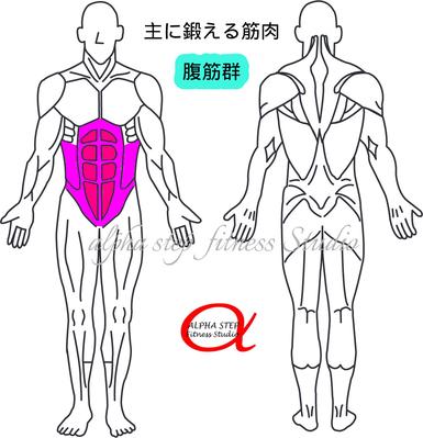 腹筋(腹直筋・腹斜筋)