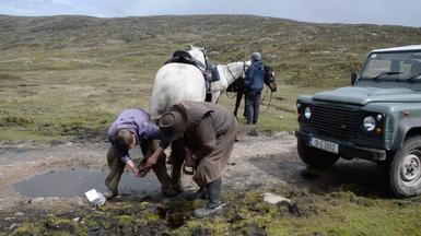 Wenn ein Huf im Moor verloren geht, wird das Pferd bei der nächsten Pause von Lee versorgt.