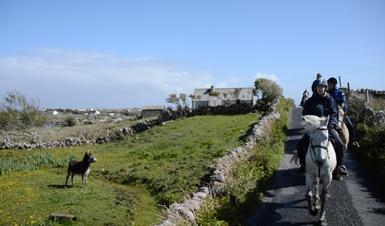 Begegnung der irischen Art. Ein Eselchen wundert sich...