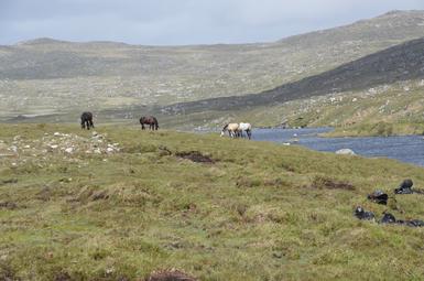 Zum Picknick-Lunch lassen wir unsere Pferde im weiten Gelände frei laufen.