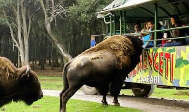 Safari en bioparque estrella