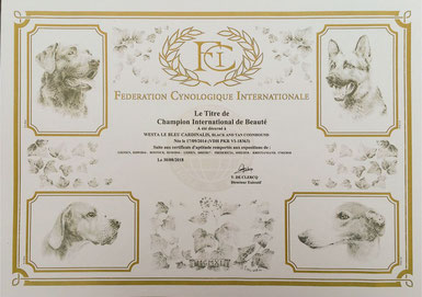 Internationaler Champion FCI