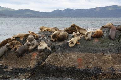 Seelöwen können auch im eiskalten Wind chillen...