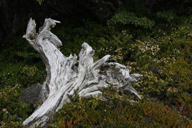 Baumskelette säumen den Weg