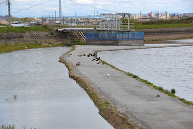 大池の中でひなたぼっこをしている鳥たち