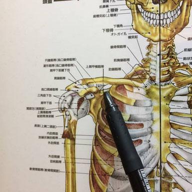 五十肩の痛みを引き起こす部分