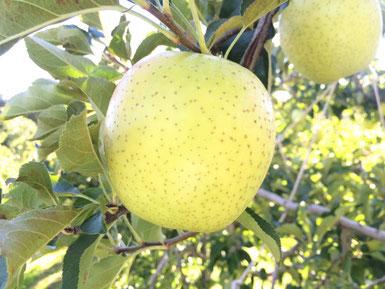 甘いりんご王林