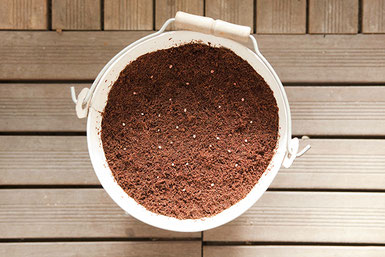 バケツ鉢に入れられた土とラディッシュの種