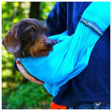 Hund in der Trageschlinge Tragetasche mit Dackel