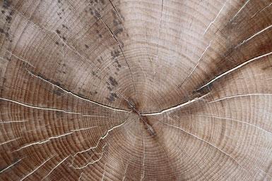 Zirbenholz - Wirkstoffe - Zirbenöl