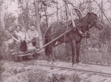 В годы Великой Отечественной войны конная тяга применялась на лесовозной узкоколейной железной дороге в Коуровском леспромхозе на Урале. Фото 1941 года.