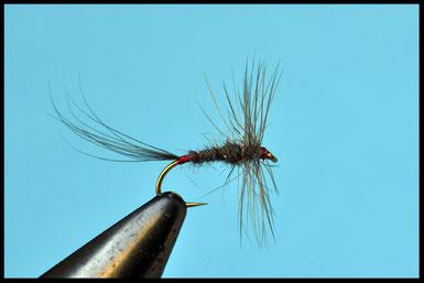 Amo: #14 Coda: gallo grigio scuro Corpo: pelo di talpa su filo rosso, che si intraveda vicino alla coda Hackle: gallo grigio scuro