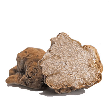 Trüffelbaum mit weißem Trüffel (Tuber magnatum)