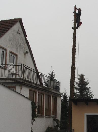 BaumService Lehmer schneidet Baum neben einem Haus