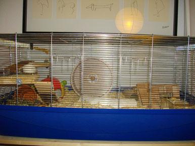 Hamsterkäfig, Lemon, Hamster, artgerechter Käfig, artgerecht, artgerechte Haltung, artgerechte Hamsterhaltung