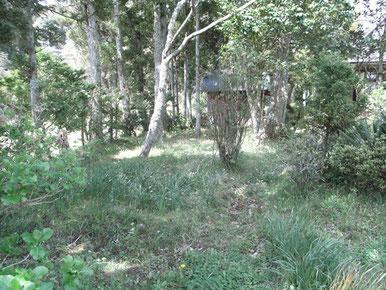 樹木葬「寂光苑」