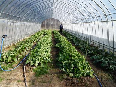 有機農作物栽培